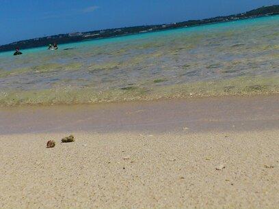 海とヤドカリ