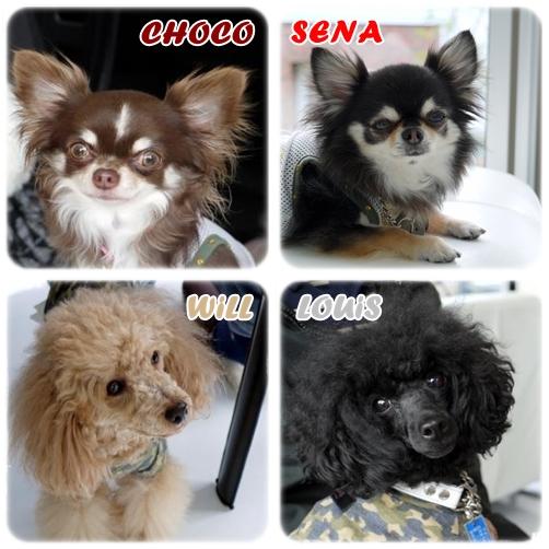 senbatsu_20120517191000.jpg