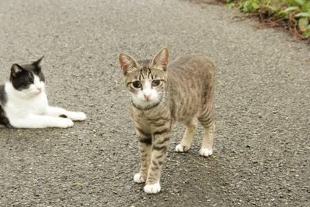 二匹の猫3