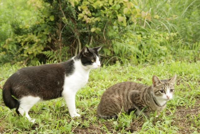 二匹の猫4