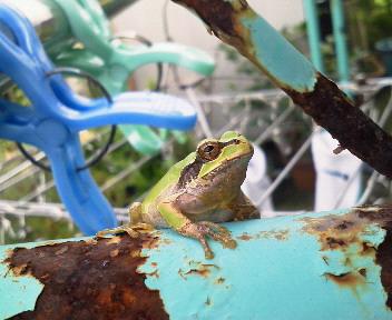 鉄パイプ蛙3