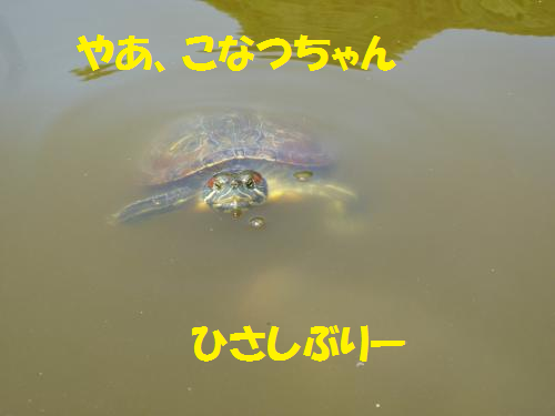 12051212.png