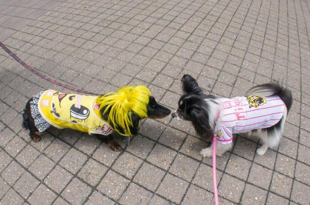 マリィ、甲子園に参上!-006