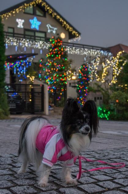 早くもクリスマス準備!-1