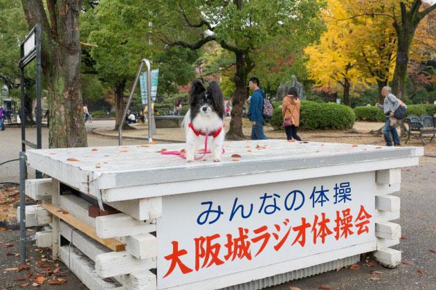大阪城公園オフ会10 ~ 女子高生にモテモテ~♪ ~-008