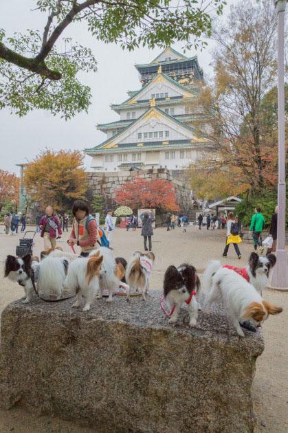 大阪城公園オフ会10 ~ 女子高生にモテモテ~♪ ~-013