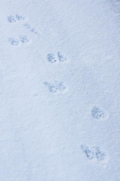 マリィ地方にも初雪~♪-004