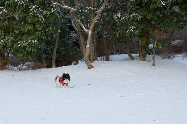 マリィ地方にも初雪~♪-006