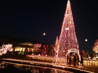 2012.12.22_足利フラワーパーク