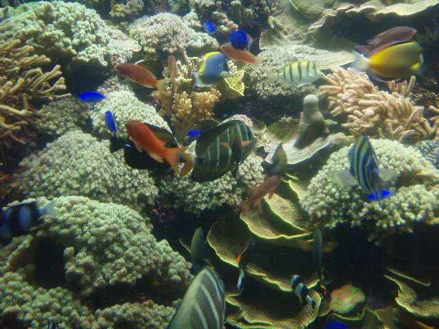 reef tank with fishes