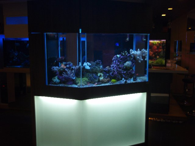 aquarium shop 2012 01