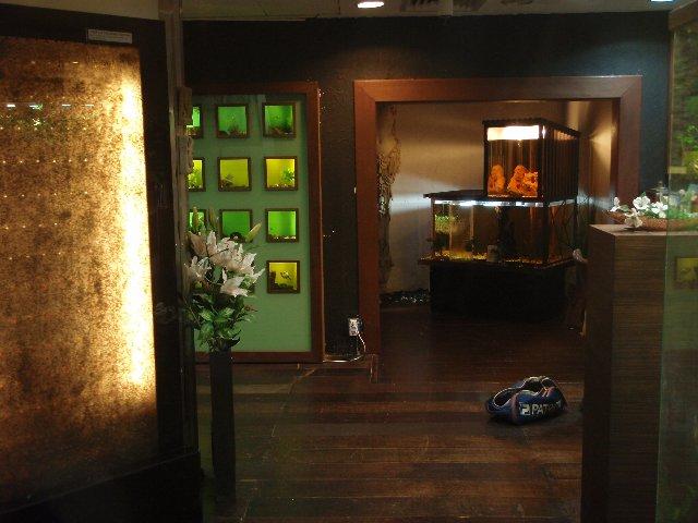 aquarium shop 2012 02