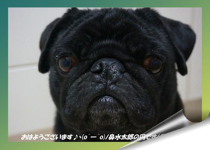 鼻水太郎トップ_edited-1