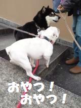 004_convert_20130221131744.jpg