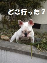 006_convert_20130221132834.jpg