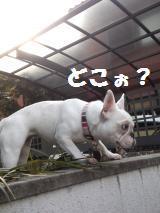 008_convert_20130221133838.jpg