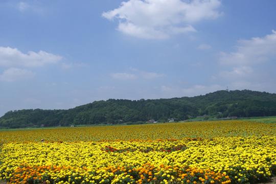 himawari-mari.jpg