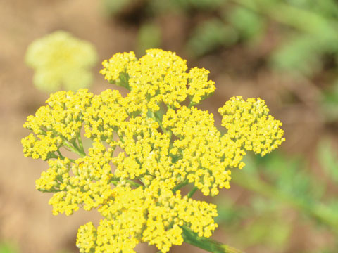 yellowyarow.jpg