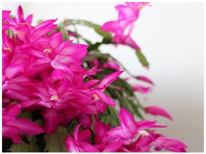 新春7(花3)