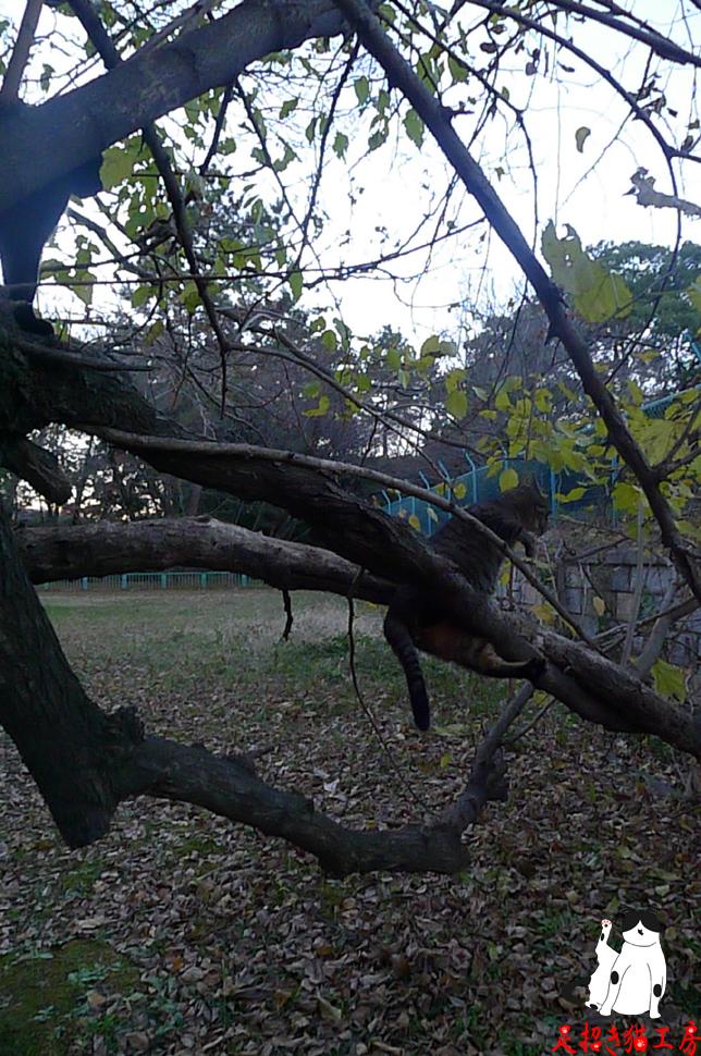 猫も木から・・・