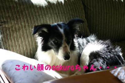 IMG_2331_convert_20121102190704.jpg