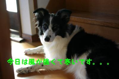 IMG_2830_convert_20121204183812.jpg