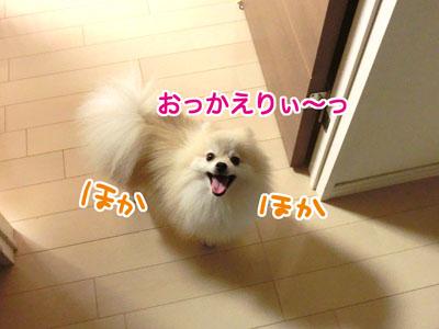 CIMG05599.jpg