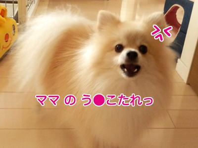 PA090131.jpg