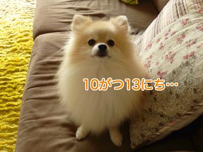 PA090134.jpg