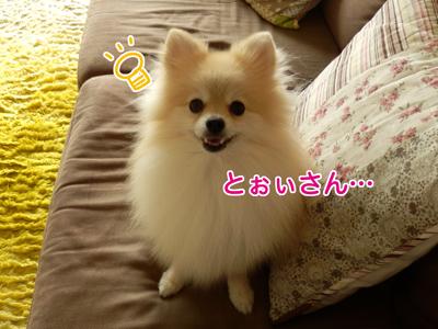 PA0901366.jpg