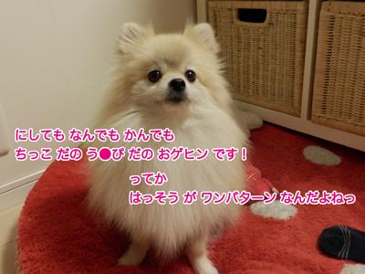 PC130545.jpg