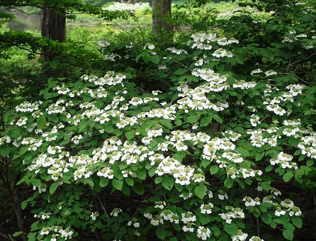 14 白い花