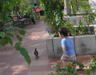 4 鳩を追いかける