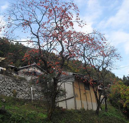 1 正暦寺への道