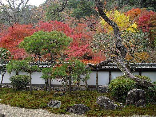6 福寿院・庭園