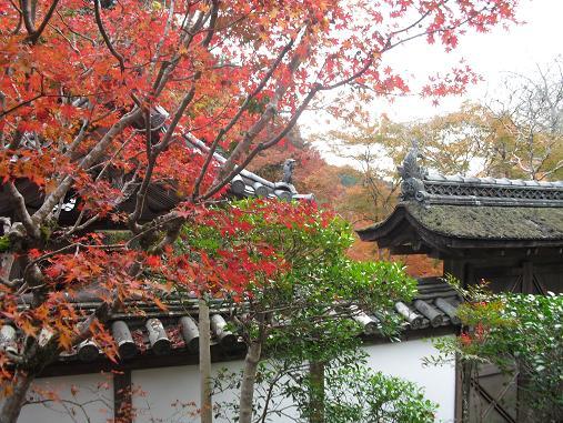 7 福寿院・庭園