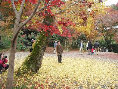 10 福寿院・銀杏の木