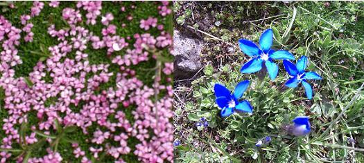 11 高山植物