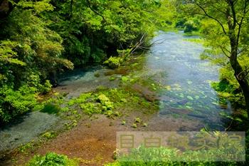 20120506柿田川公園2