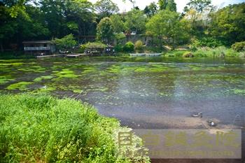 20120506柿田川公園3