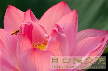 20120729水蓮2