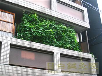 2012年緑のカーテン10月最後の様子