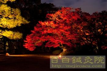 2012六義園紅葉ライトアップ3都内の紅葉シリーズ