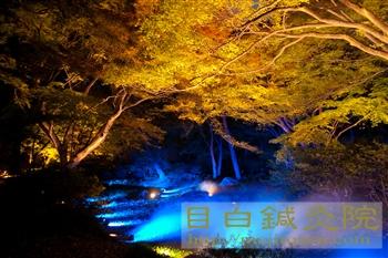 2012六義園紅葉ライトアップ5都内の紅葉シリーズ