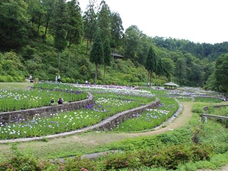 山崎菖蒲園 (3)