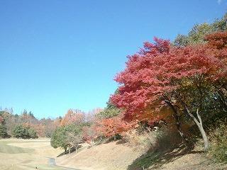 20121127 児玉神川