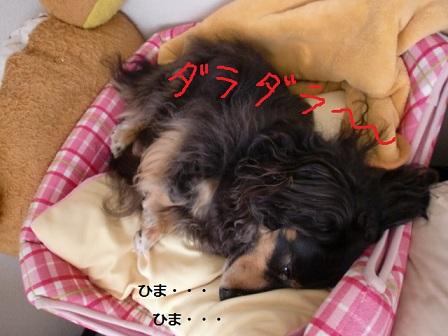 CIMG3514.jpg
