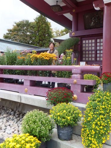 菊祭り12
