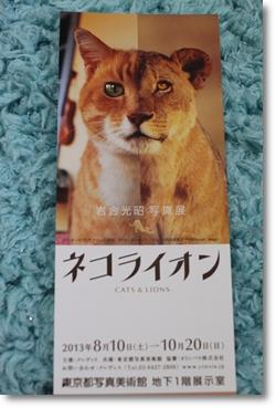ネコライオン
