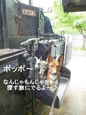 2012_05120007.jpg